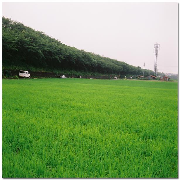 IMG_20090709_autocord001.jpg